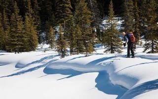 Лыжи STC — обзор и особенности