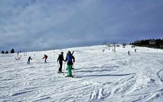 Лапки для лыжных палок