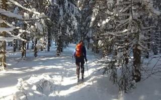 Охотничьи лыжи — выбор размера и материала