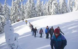 Лыжи лесные — как выбрать?